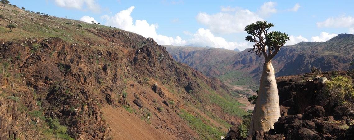 Socotra- Landscape