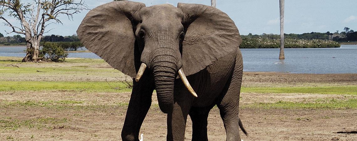 Tanzania- Elephant