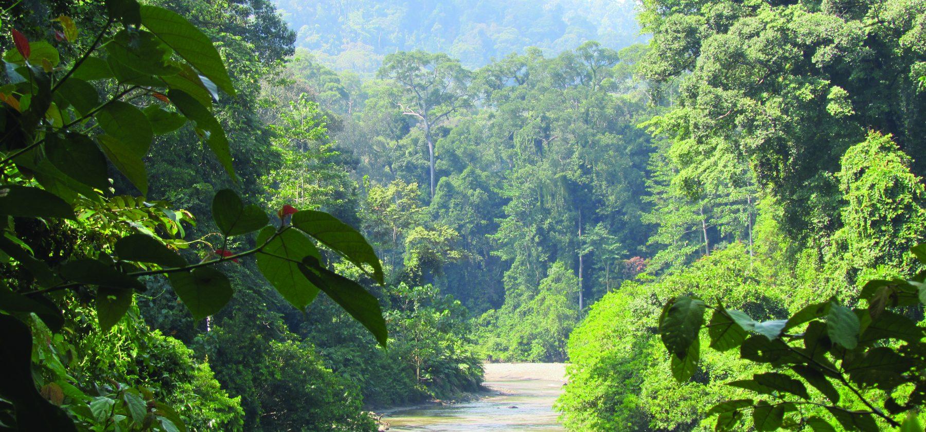 Borneo- Kinabalu river corridor
